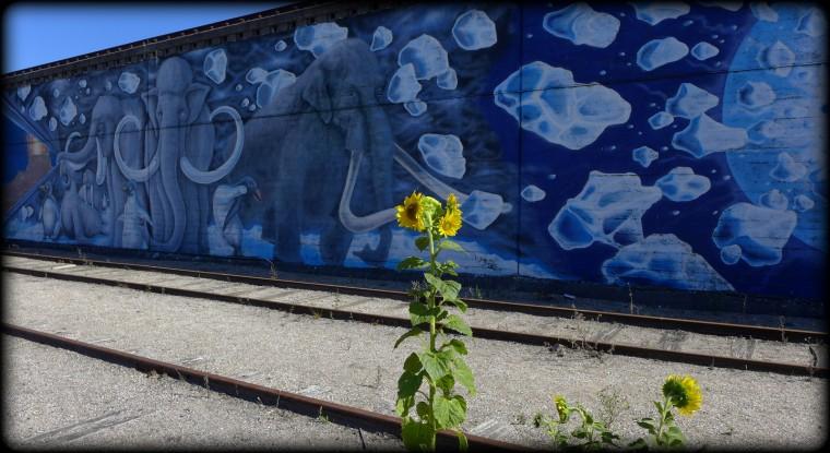 3-Sydhavnen rundt, 28.08.2014 069